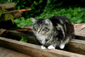 how to keep cats off your garden