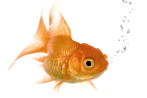 Fish tank maintenance tips ky saltwater aquarium client for How to take care of fish tank