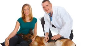 Treating canine disease