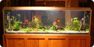 Fish tank with different kinds of fish