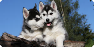 Image of healthy puppies