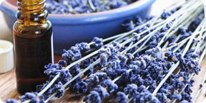 Lavender and essential oil