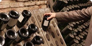 Choosing wine in wine cellar